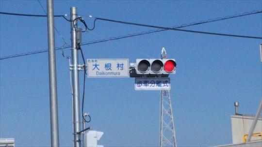大根村 (3).JPG